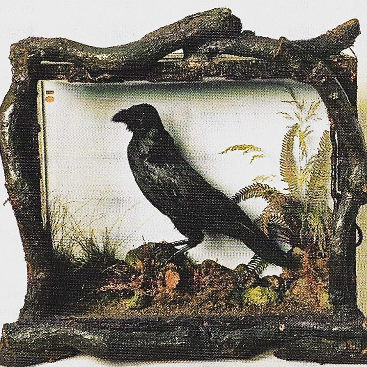 In the spirit of HalloweenThis is Grip the pet ravenhellip