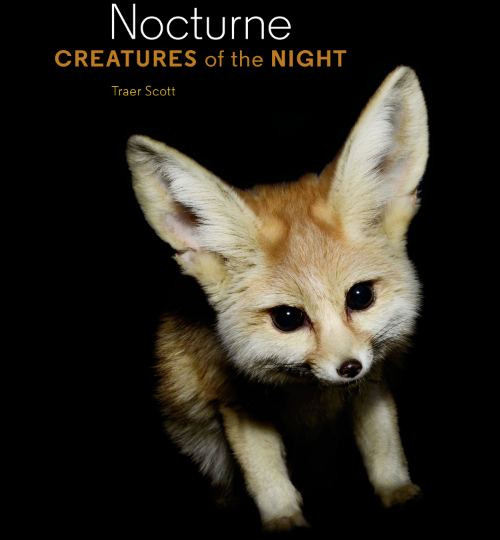 Nocturne: Creatures Of The Night by Traer Scott