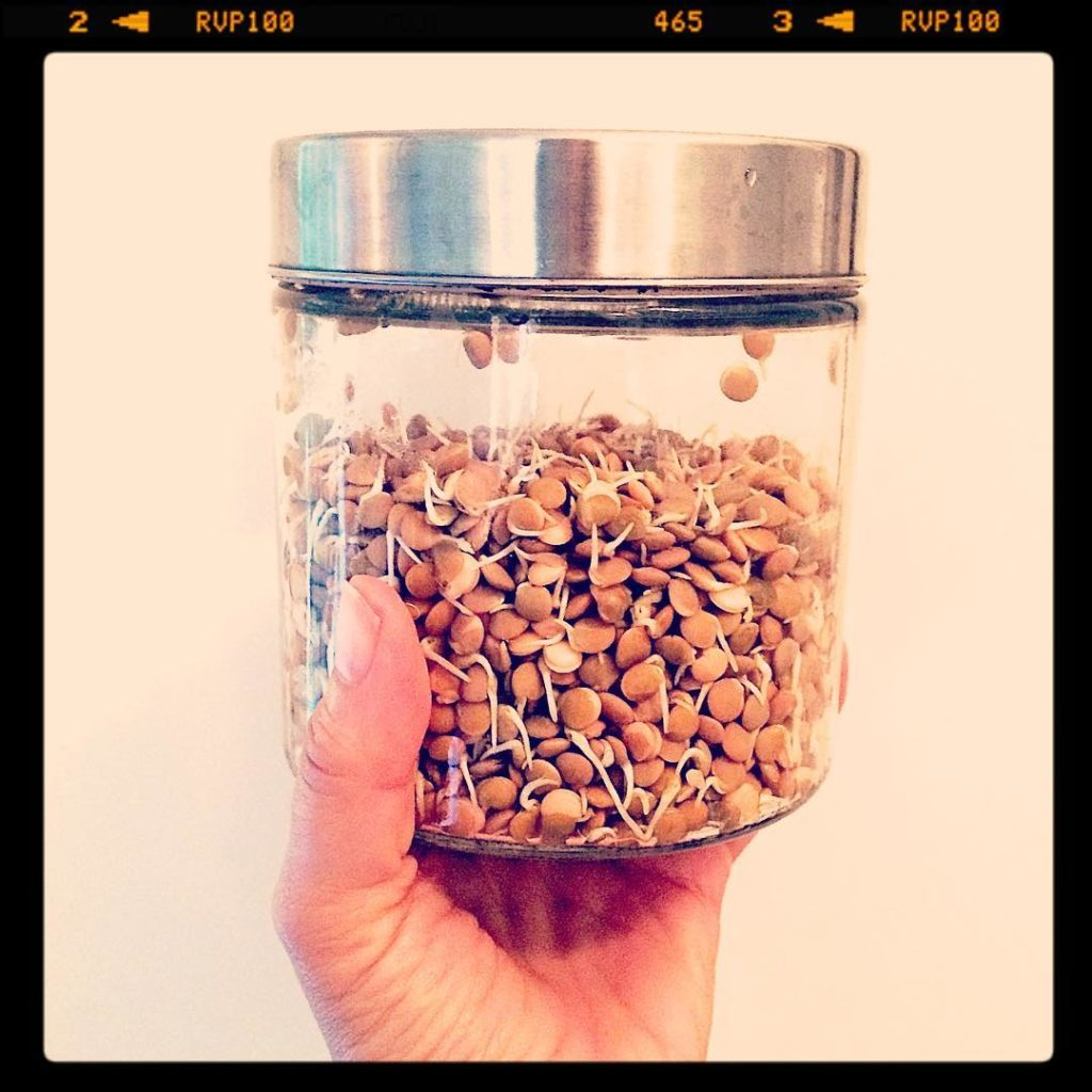 My sprouting jar which I use to sprout superfoods Sproutshellip