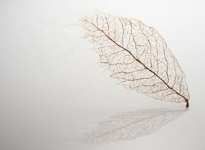 Jenine-Shereos-leaf-from-human-hair-2