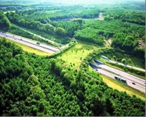 Wildlife-Overpasses-Around-The-World-Working-With-Nature-Not-Against-300x240