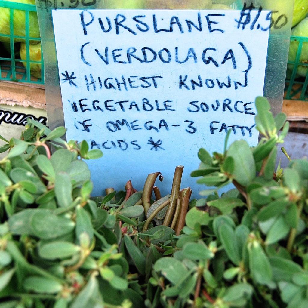 market-purslane-1024x1024