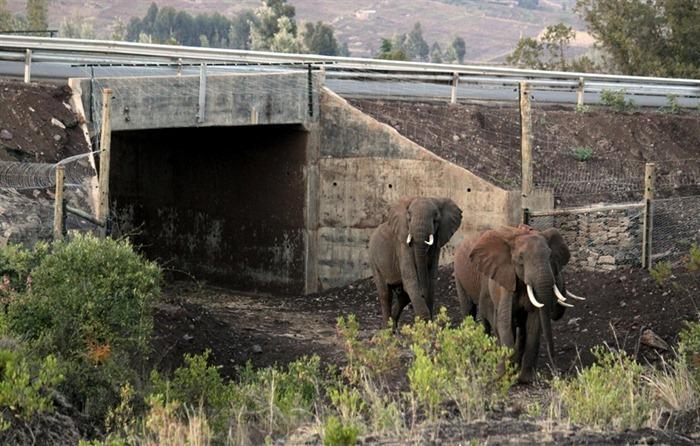 wildlife-crossings-83