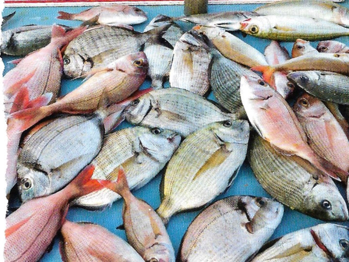 Buy Line-Caught Seafood
