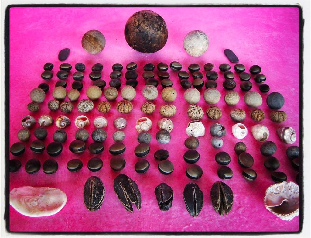 Natural Treasures Found on the beach in Cuixmala Mexico Shellshellip