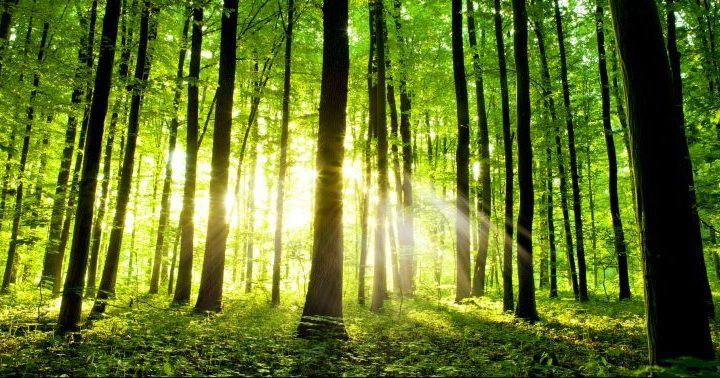 March 21st is International Day of Forests