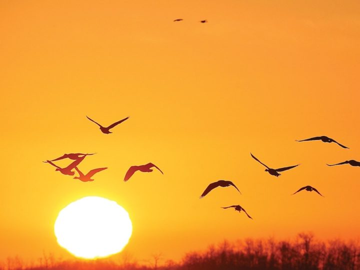 May 10th is Migratory Bird Day