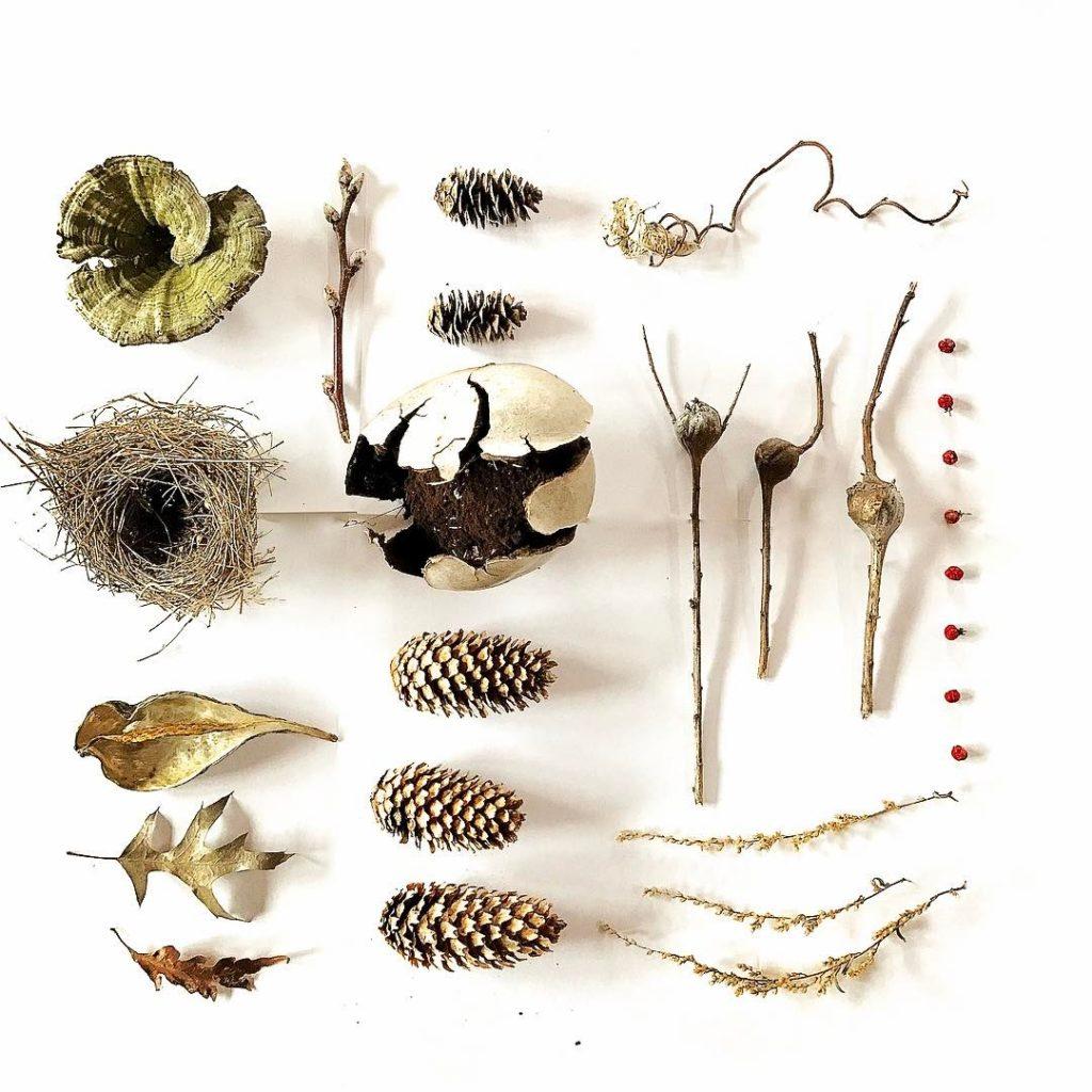 Natural Treasures Upstate New York Lichen  birds nest hellip