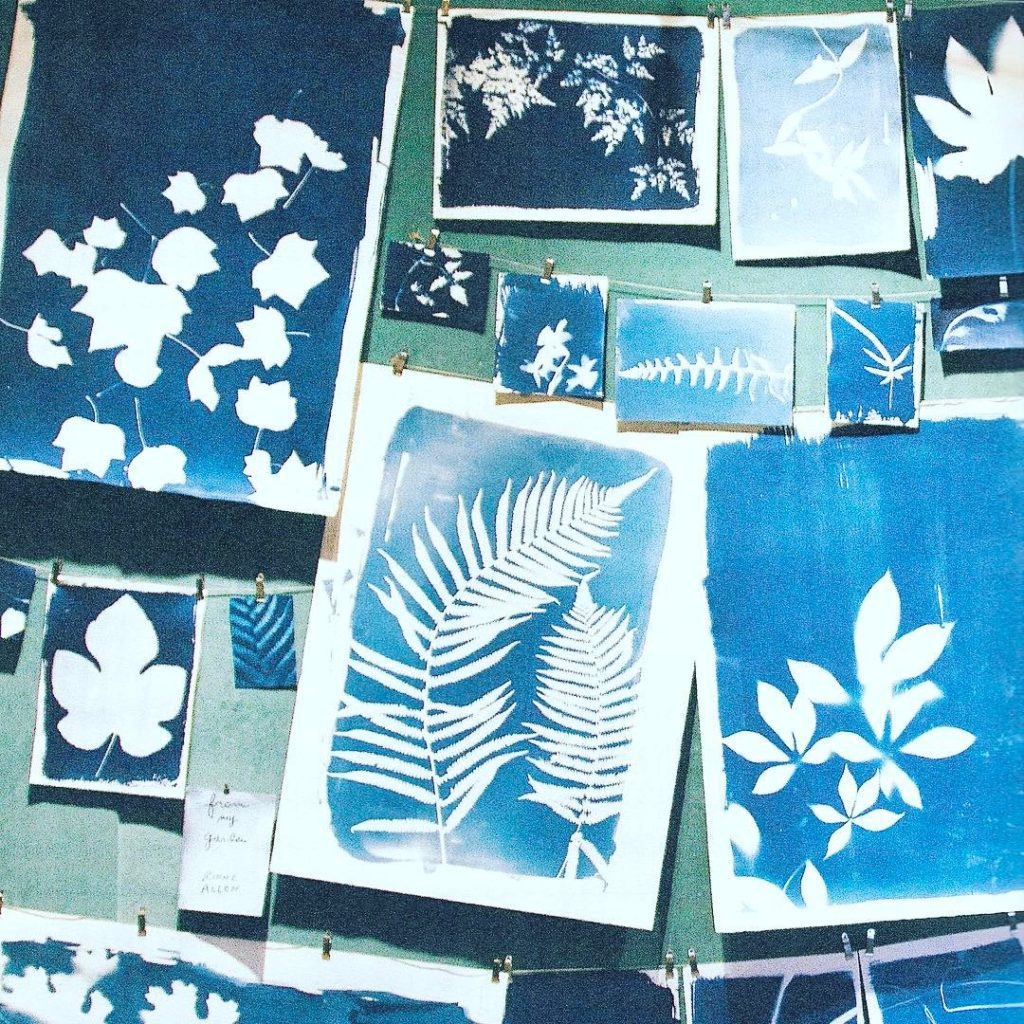Inspired by Nature The cyanotype process dates back to 1841hellip
