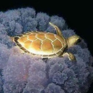 Celebrate World Turtle Day today! Here is a sea turtlehellip