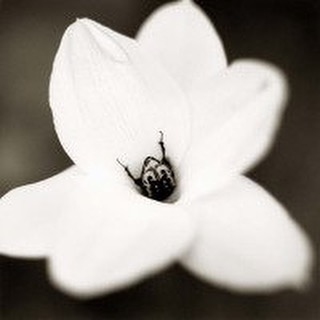 Beetle on Rain Lily By Irving Penn I was recentlyhellip