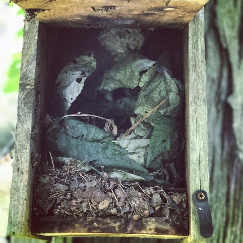 This afternoon I found a bird house in the gardenhellip