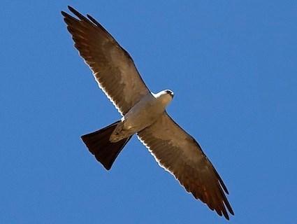 October Bird Migration
