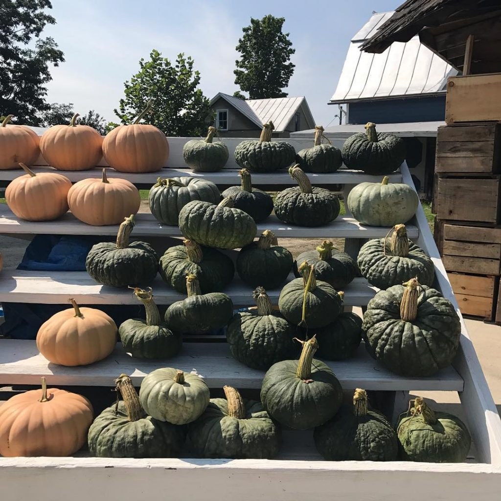 Im mad about pumpkins and their winter squash cousins! Myhellip