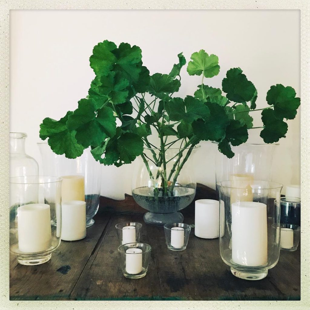 From the Garden to the House Geranium cuttings which hopefullyhellip
