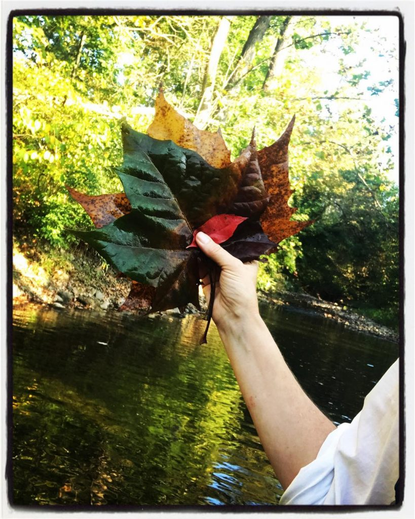 Autumn activity walking in the river collecting beautiful leaves andhellip