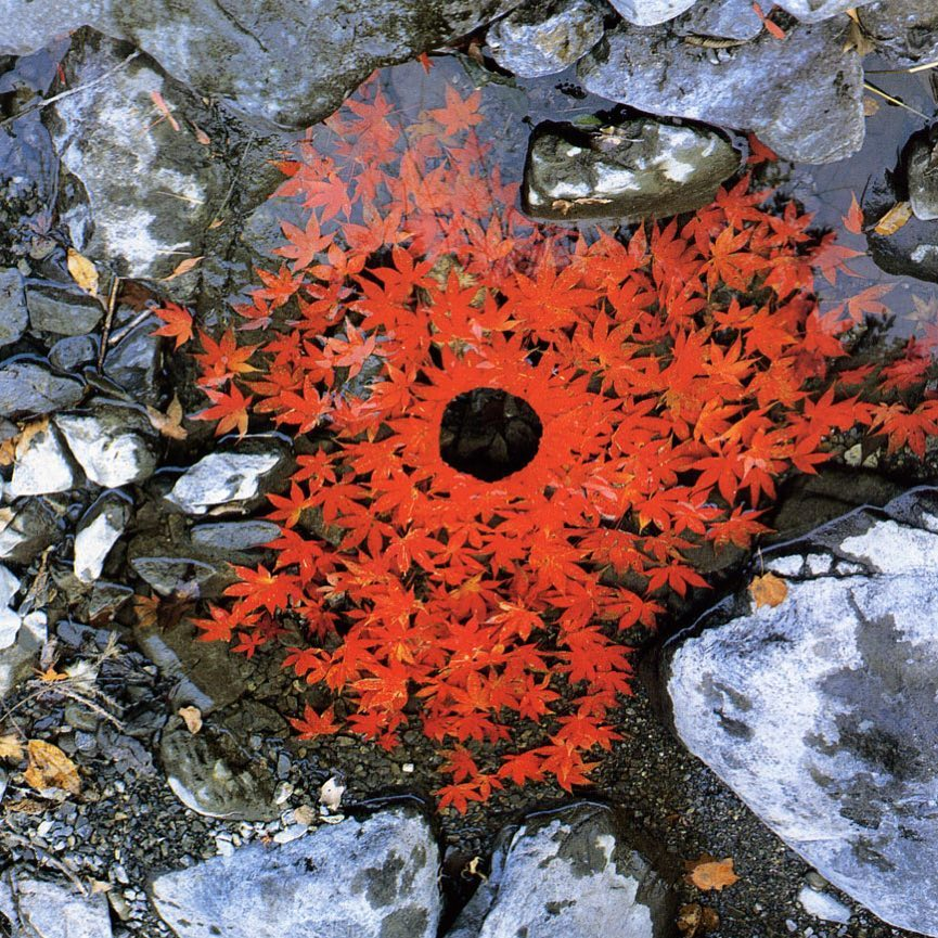 Japanese maple leaves OuchiyamaMura Japan By Andy Goldsworthy Ive beenhellip