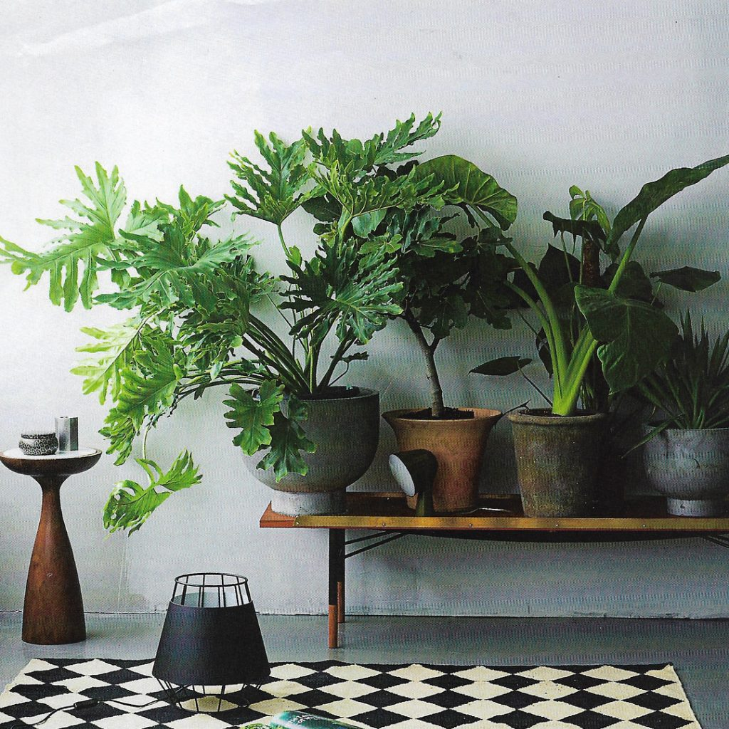 Cleaner Air Adding plants to your home is not onlyhellip