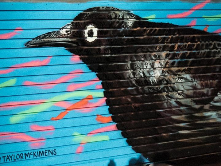The Audubon Mural Project: Street Art in Harlem Highlighting Endangered Bird Species
