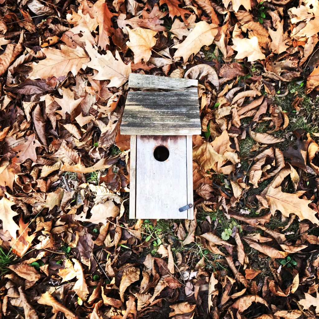 Nesting Boxes Tis the season to clean out your nestinghellip