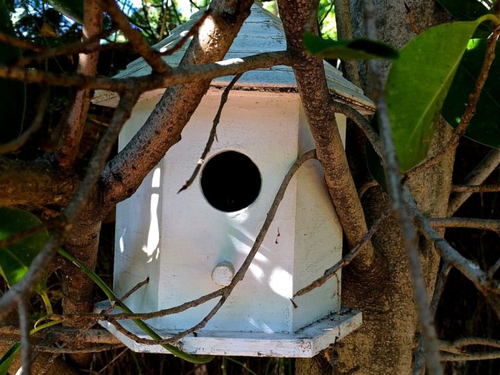 Birdhouses in the Garden- Where Spring is in the Air
