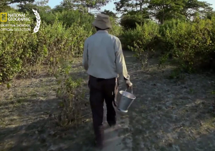 Man plants trees every day for 37 years