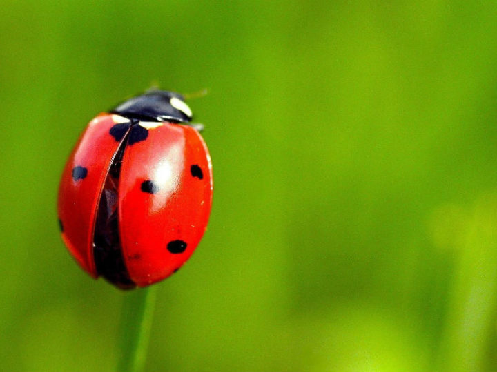 Biomimicry in action: Ladybugs