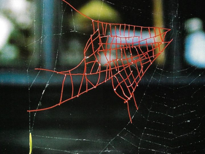 Mended Spiderweb #8