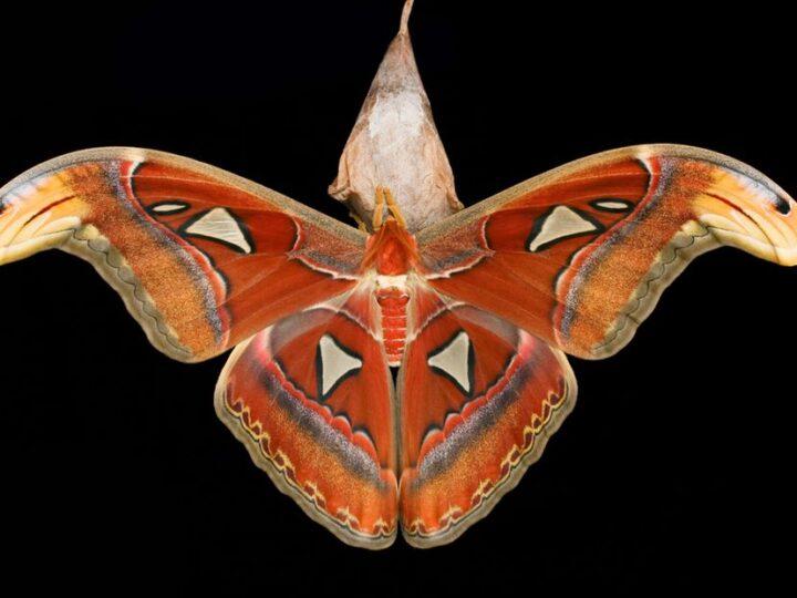 The Audubon Institute's Insectarium