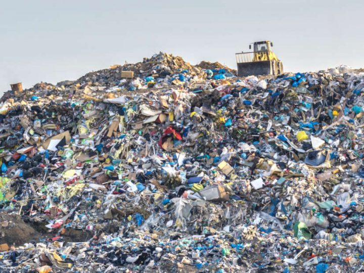 Plastic-eating fungus found at a landfill site in Pakistan