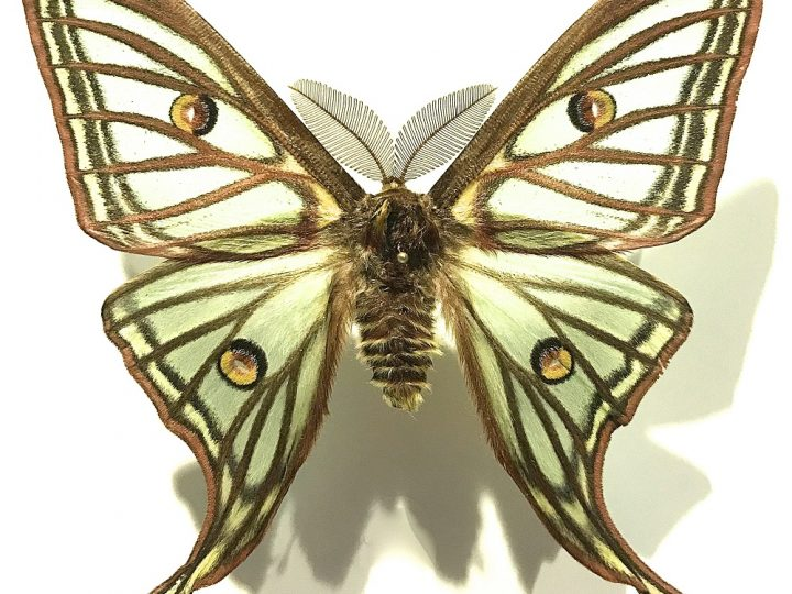 Insectpalooza