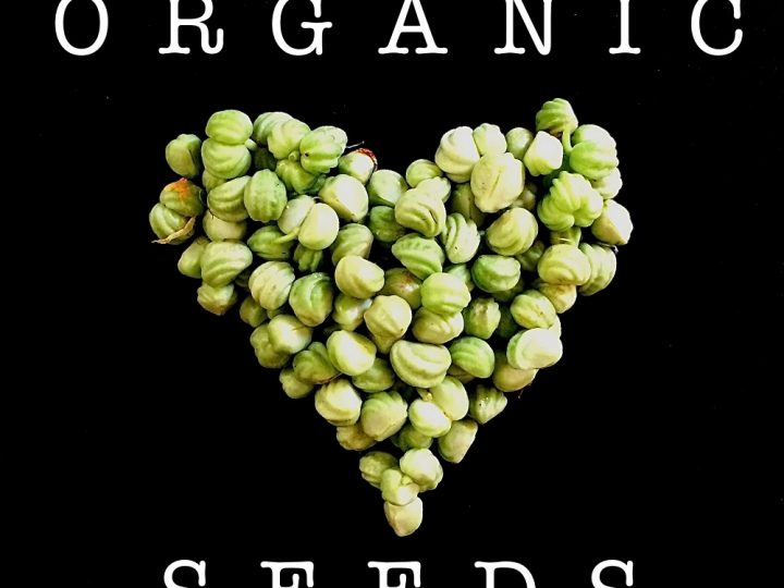 Best Seed Catalogs
