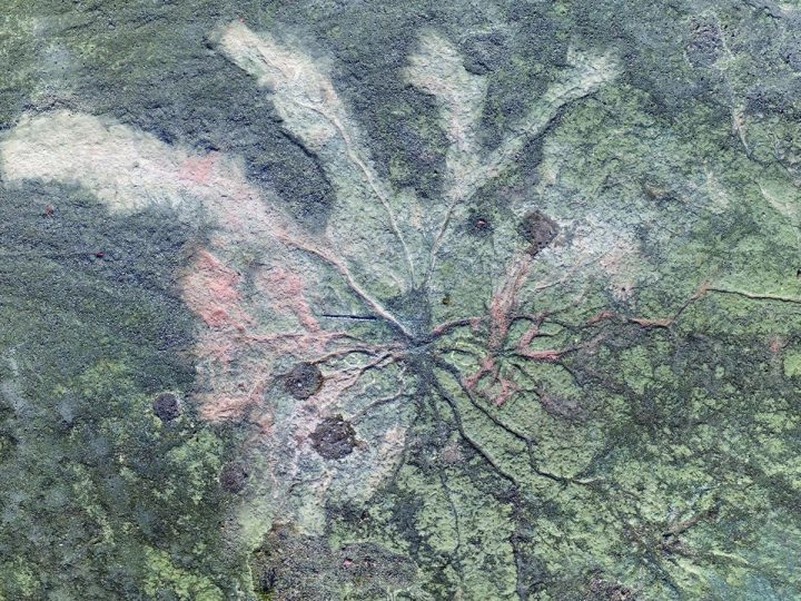 World's oldest known fossil forest found in Upstate New York